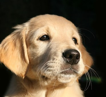 Begin Training Your Puppy Early