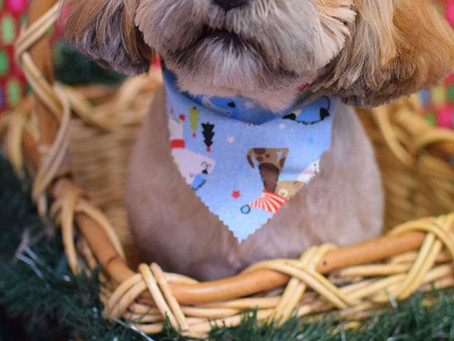 Choosing the Right Groomer for Your Pet