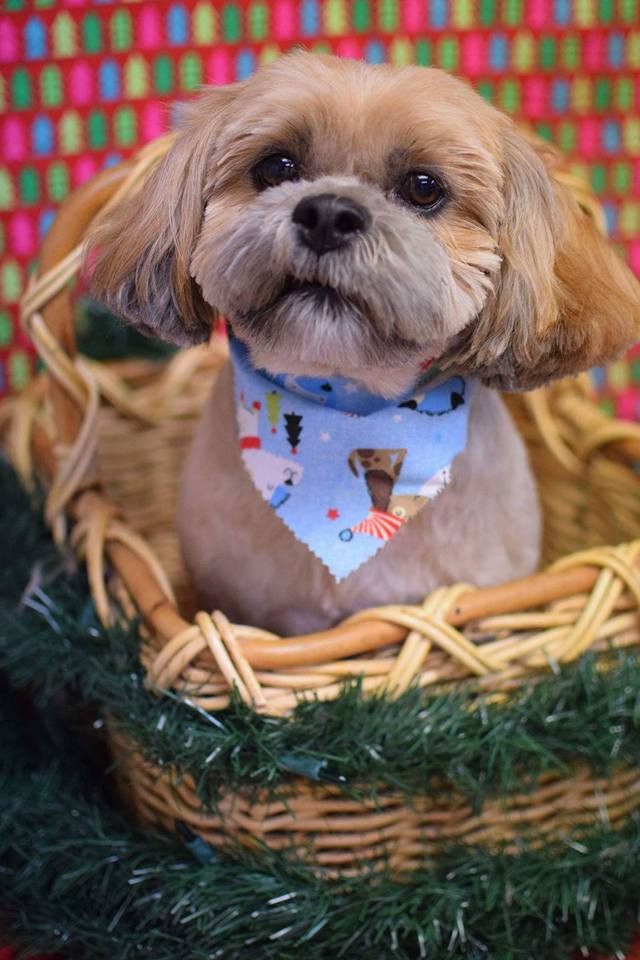 Choosing the Right Groomer for Your Pet| The Well-Trained Dog & Pet Care | Roanoke