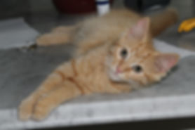 Roanoke-Pet-Sitter11.JPG
