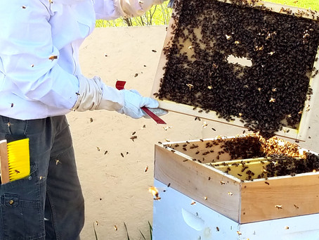 Preparing our Bees for Winter