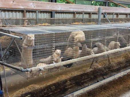 The Fur Farm next door