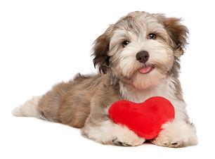 heartdog.jpg