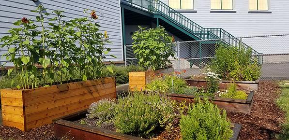 School Garden 2019.jpg