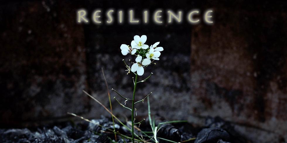 CVC7 Resilience web banner long.jpg