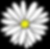 daisy-25627_960_720 Kopie.png