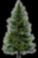 Logo_flückiger.png