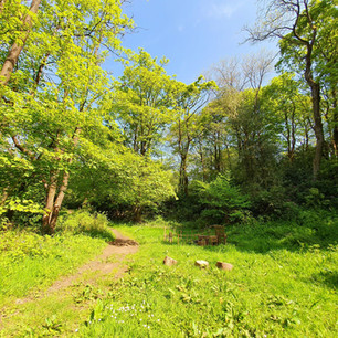 Woodland on a sunny day