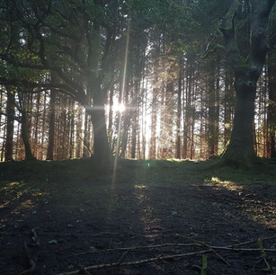 Sun through the trees at Gisburn Forest