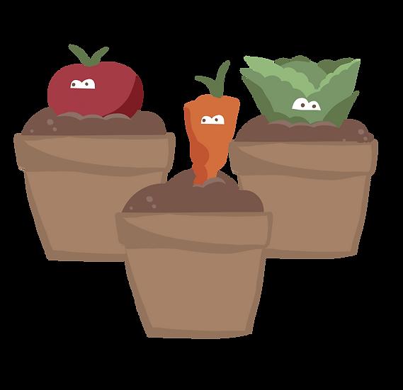 Starter Pack (18 Seedlings)