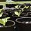 Thumbnail: Starter Pack (18 Seedlings)