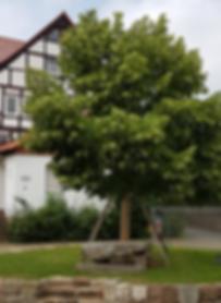 Historischer Gerichtsplaz in Lohfelden, Ortsteil Vollmarshausen (2018)