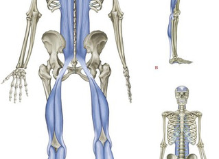 Could tight hamstrings be causing your chronic back pain or plantar faciitis?