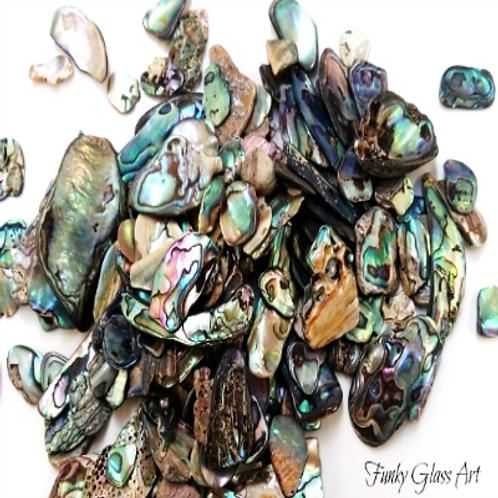 Paua Pieces - Fines