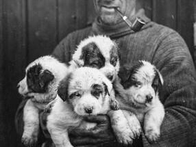 The fate of Shackleton's dogs