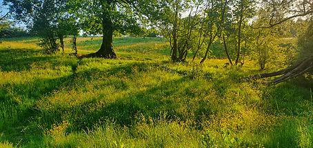 sunfield walk .jpg