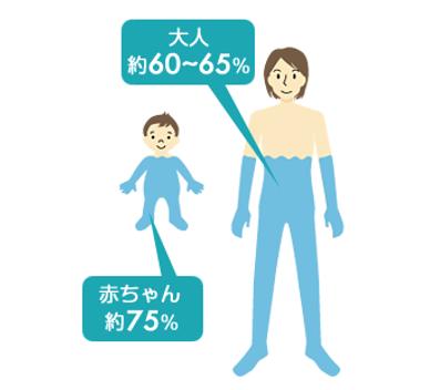 体の水分量.png
