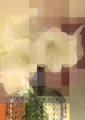 01_amarylis_Retro_web.jpg