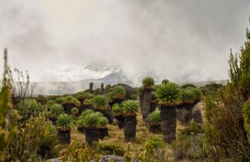 Africa Mt Kili 180407_165457.jpg