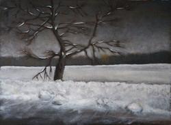 Roadside Tree In Winter