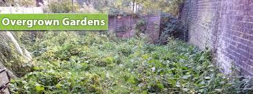 Overgrown Gardens