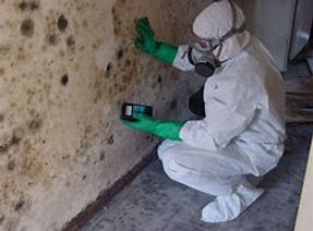 mold remediaton.jpg