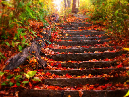 Enjoying Autumn: The importance of mindfulness at this time of year
