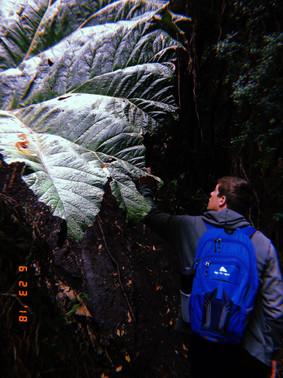 Discovering huge plants in high altitudes.