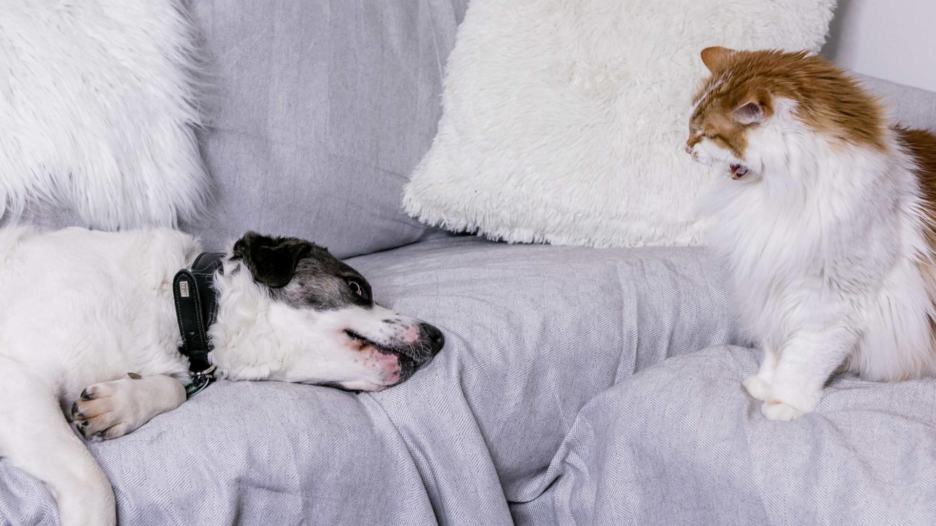 Probleme zwischen Hund und Katze