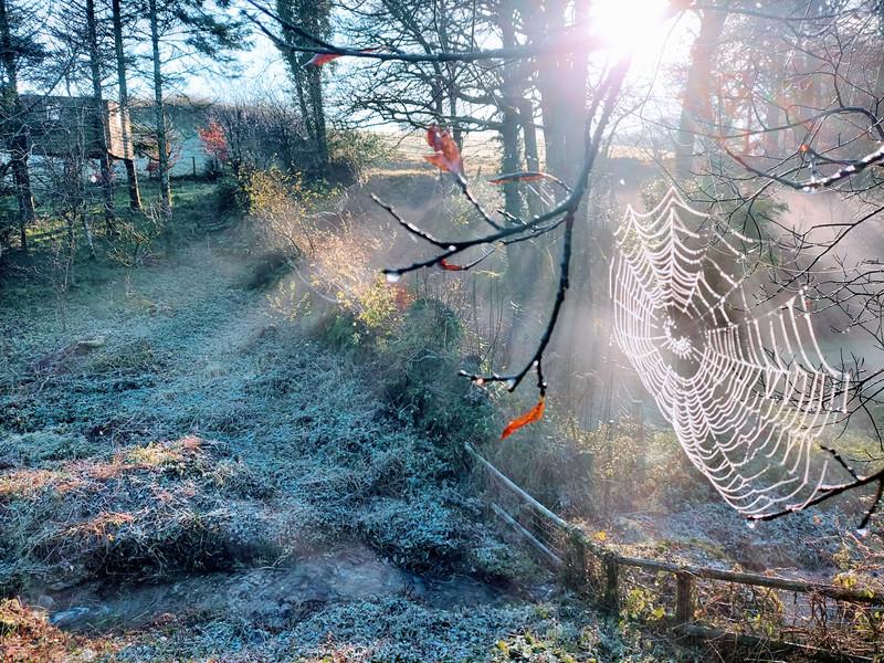 A Winters Web - Northcote
