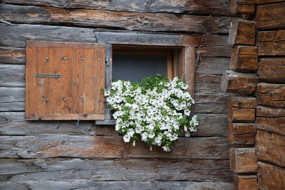 Fenetre fleurie.jpg