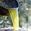 Thumbnail: Frantoio Sant'Agata, EXTRA VIRGIN OLIVE OIL SELECTION MELA FAMILY 190YR 50cl