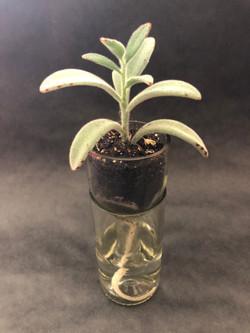 Tall Self-Watering Planter