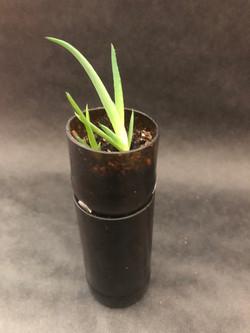 Short Self-Watering Planter