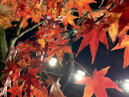 岩谷堂の紅葉に行ってきました