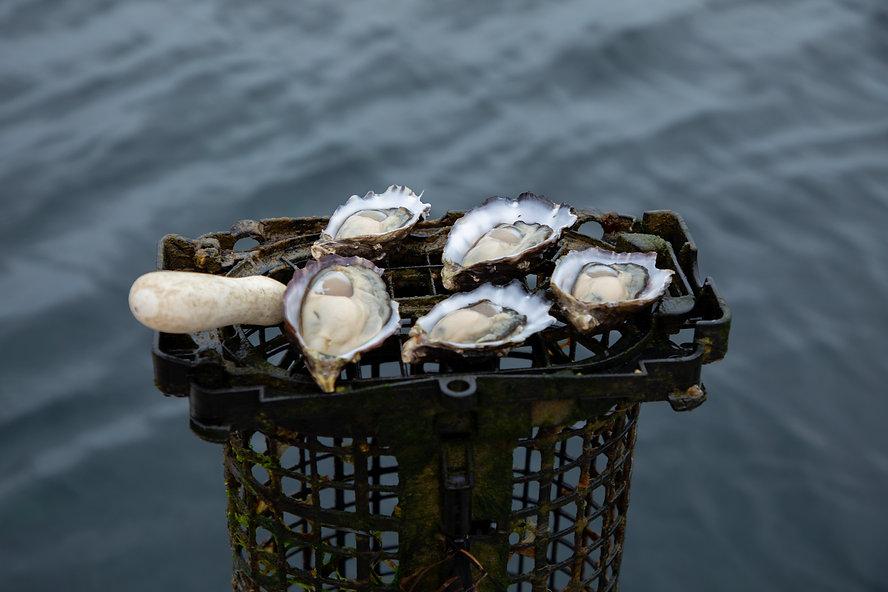 Fresh organic oysters