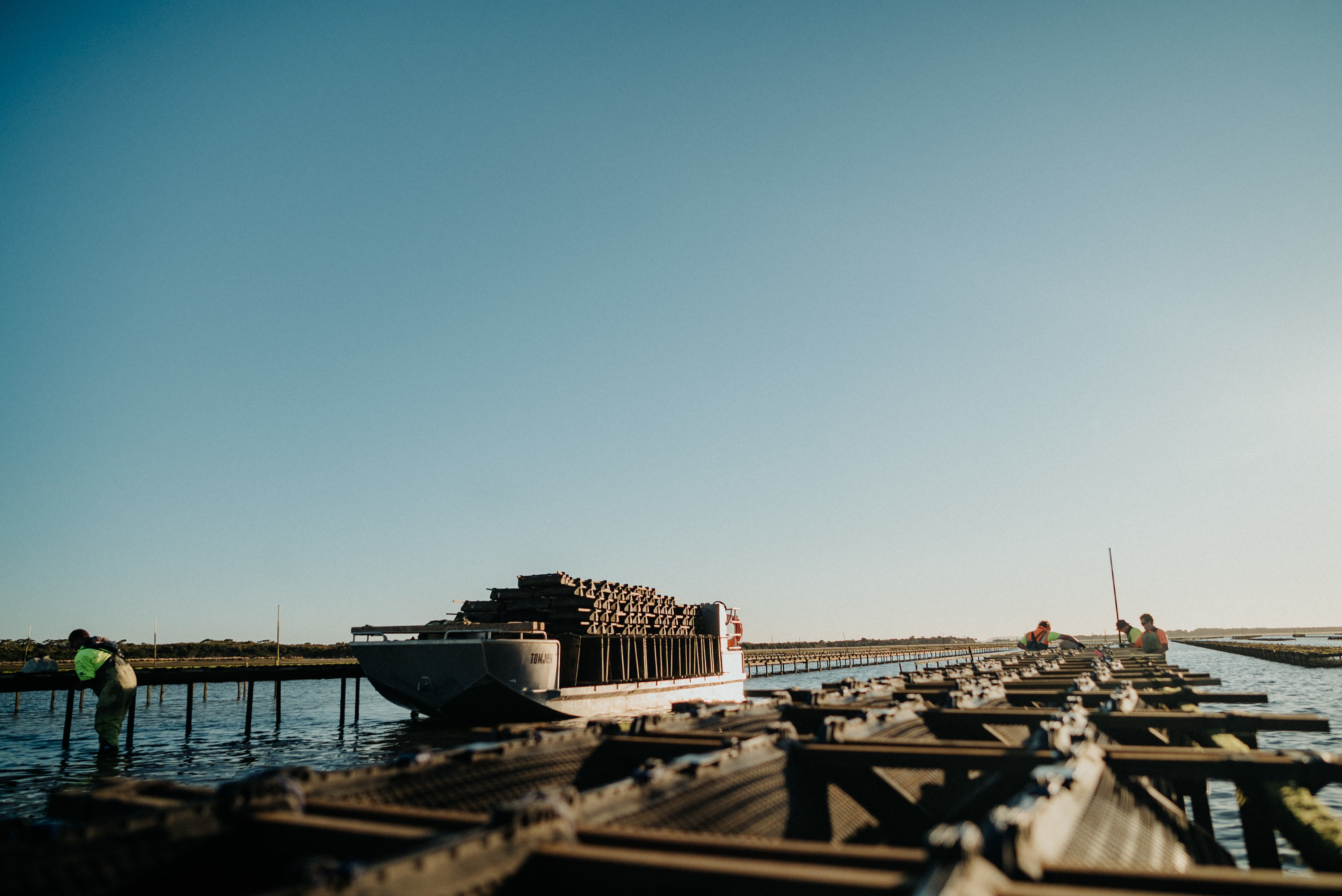 Tarkine-fresh-oyster-Andy-27