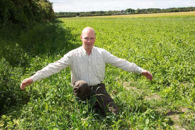 Michael Bundgaard, Klitgaard Agro viser en vildtstribe, der er udlagt for at lave rette marken, der sikrer effektivitet i markarbejdet.