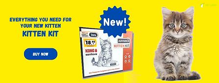 english-Kitten-kit.png
