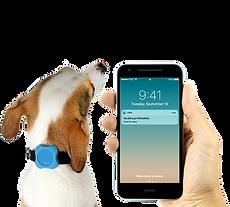 Bluetooth tracker para cães e gatos + Acessório - Lapa