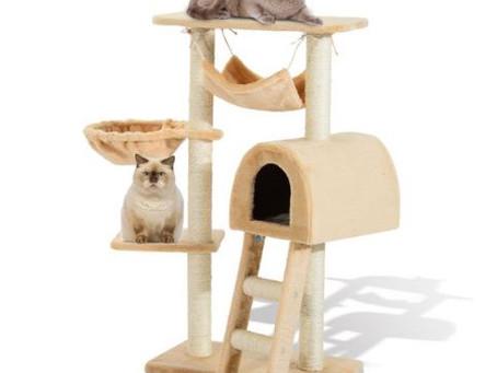 A importância dos arranhadores para gatos