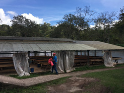 Sustainalbe cacao farm