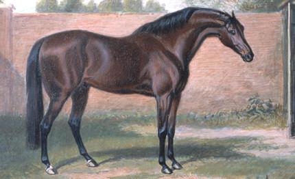 El origen del caballo Purasangre