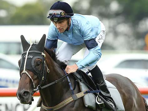La postura del jockey y su importancia en la velocidad del caballo de carrera.