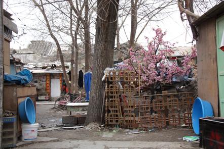 Beijing gardens.jpg