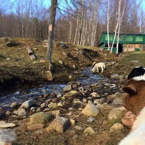 Farm Sitting Reflection.