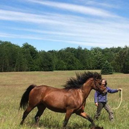 Horseless Workshop with Sandy Ruiter