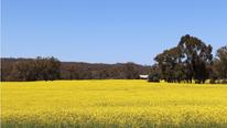 EU Biofuel Boom Benefiting Aussie Canola Growers