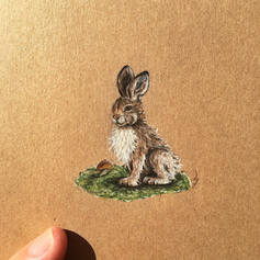 Bunny drawing Lucie Schrimpf