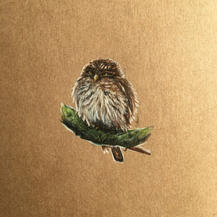Owl drawing Lucie Schrimpf